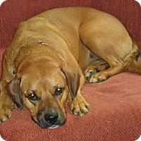 Adopt A Pet :: Luna - Staunton, VA