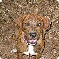 Adopt A Pet :: *Layla - Winder, GA