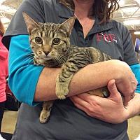 Adopt A Pet :: Garcia - Port Republic, MD