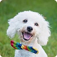 Adopt A Pet :: Leo - Kingwood, TX