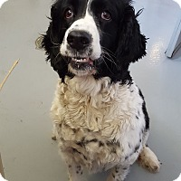 Adopt A Pet :: Lexie - Fort Riley, KS