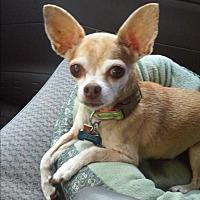 Adopt A Pet :: Bacchus - Earl, NC