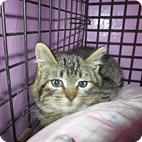 Adopt A Pet :: Jenna - Coos Bay, OR