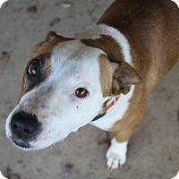 Adopt A Pet :: Rosie! - Sacramento, CA