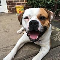 Adopt A Pet :: Gabriel - Columbia, SC