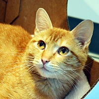 Adopt A Pet :: Quinn - Lincoln, NE
