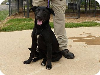 Labrador Retriever Mix Dog for adoption in Plano, Texas - Gabriella