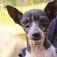 Adopt A Pet :: Prisie - Pittsburgh, PA