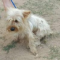 Adopt A Pet :: Dior - Pipe Creek, TX