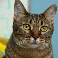 Adopt A Pet :: LOLA - Metairie, LA
