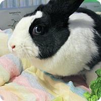 Adopt A Pet :: Tatianna - Hillside, NJ