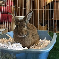 Adopt A Pet :: Ripley - Paradis, LA