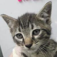 Adopt A Pet :: Cecilia - Columbiana, AL