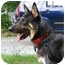 Photo 1 - German Shepherd Dog Dog for adoption in Pike Road, Alabama - Marx