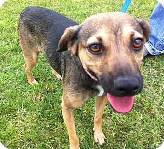 Beagle Mix Dog for adoption in El Cajon, California - WINCHELL