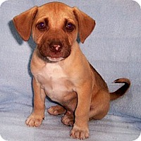 Adopt A Pet :: Custar - Byrdstown, TN