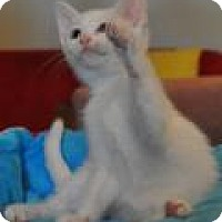 Adopt A Pet :: Aston - Port Republic, MD