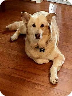 Labrador Retriever Mix Dog for adoption in Mount Juliet, Tennessee - Mamba