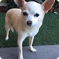 Adopt A Pet :: Bitty - Rancho Palos Verdes, CA