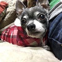 Adopt A Pet :: Leah - Decatur, GA