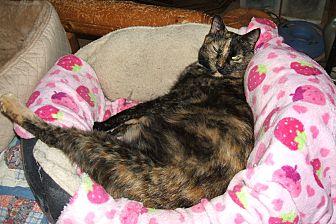 Domestic Shorthair Cat for adoption in Acworth, Georgia - Emma Jean