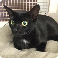 Adopt A Pet :: Shadey - Orlando, FL