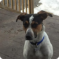 Adopt A Pet :: Kovu - in Maine - kennebunkport, ME