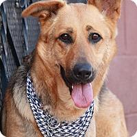 Adopt A Pet :: Skyla von Sontra - Los Angeles, CA