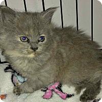 Adopt A Pet :: Missy - Jefferson, NC