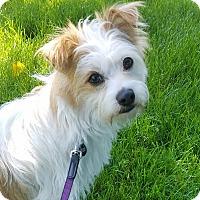 Adopt A Pet :: CUDDLES-ADOPTED - Lynnwood, WA
