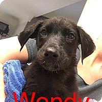 Adopt A Pet :: WENDY - Beaumont, TX