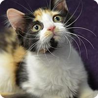 Adopt A Pet :: Bailey's170455 - Atlanta, GA