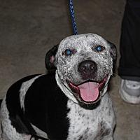 Adopt A Pet :: Maybelle - Cuero, TX