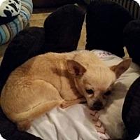Adopt A Pet :: Padre - Mesa, AZ