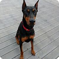 Adopt A Pet :: Berlin - Vacaville, CA