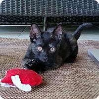 Adopt A Pet :: Henna - McCormick, SC