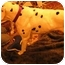 Photo 3 - Dalmatian Dog for adoption in League City, Texas - Deke