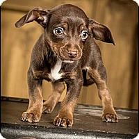 Adopt A Pet :: Frazier - Owensboro, KY