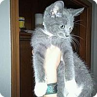 Adopt A Pet :: Paws - Grand Rapids, MI