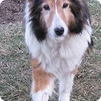 Adopt A Pet :: Misty - Charlottesville, VA