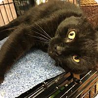 Adopt A Pet :: Scottie - Bear, DE