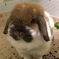 Adopt A Pet :: Camille - Waynesboro, VA