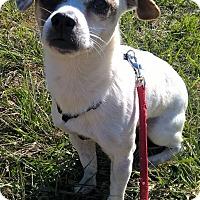 Adopt A Pet :: Fernando - Orlando, FL