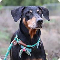 Adopt A Pet :: Sadie - Fillmore, CA