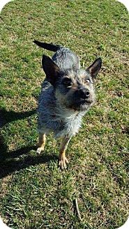 Terrier (Unknown Type, Medium) Mix Dog for adoption in Lima, Pennsylvania - Daisy