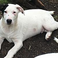 Adopt A Pet :: Lathan- DEAF - Louisville, KY