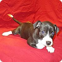 Adopt A Pet :: 17-d04-053 TJ - Fayetteville, TN