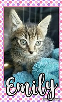 Domestic Shorthair Kitten for adoption in Edwards AFB, California - Emily