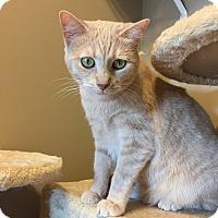 Adopt A Pet :: Myra - Des Moines, IA