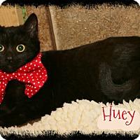 Adopt A Pet :: Huey - Shippenville, PA